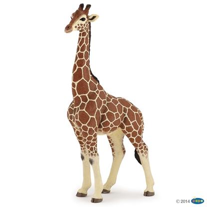 Papo 50149 samiec Żyrafy  20x11x6cm