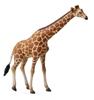 CollectA 88534 Żyrafa siatkowana  rozmiar:XL (004-88534)