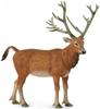 CollectA 88829 jeleń Dawida (Milu chiński) rozmiar:L (004-88829)