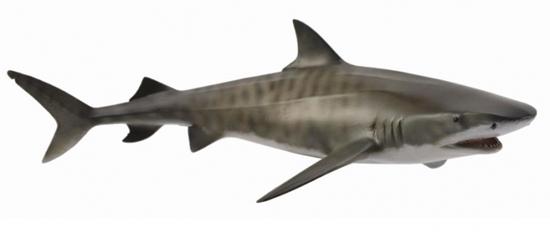 CollectA 88661 Żarłacz tygrysi  rozmiar:L (004-88661)