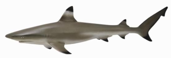 CollectA 88726 Żarłacz rafowy czarnopłetwy  rozmiar:M (004-88726)