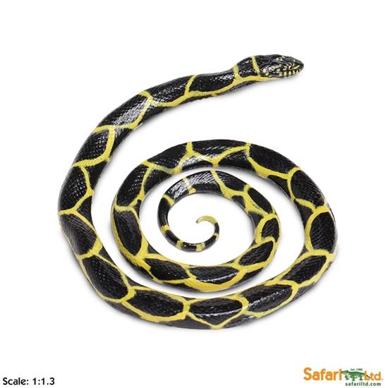 Safari Ltd 257929 Lancetogłów królewski 19x15,2x2,3cm