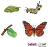 Safari Ltd 622616 Cykl rozwojowy motyla monarchy -4 el.blist