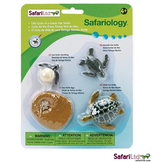 Safari Ltdi 662316 Cykl rozwojowy żółwia morskiego 18x23cm
