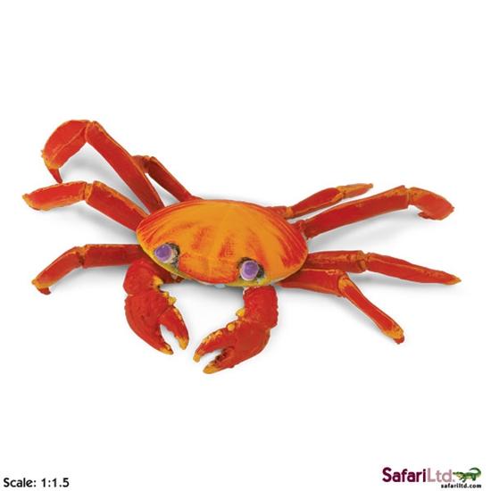 XL Safari Ltd 261729 Krab światłonogi z Galapagos 12,5x19cm