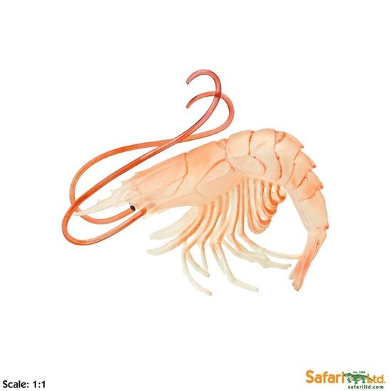 XL Safari Ltd 265729 Krewetka  9,75 x 8,5cm  skala 1:1