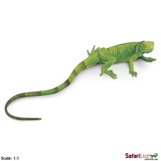 Safari Ltd 258329 Młody legwan zielony 24x10cm  skala 1:1