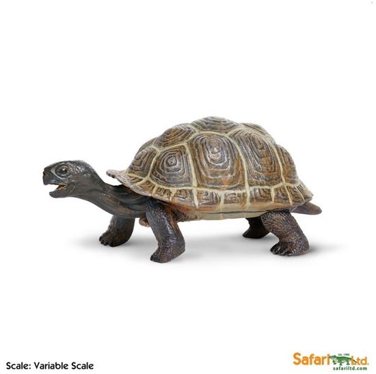 XL Safari Ltd 260829 Żółw z Galapagos młody  14 x 6,5cm
