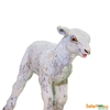 Safari Ltd 100137 Owieczka młoda  5,7x2,4x4,2cm