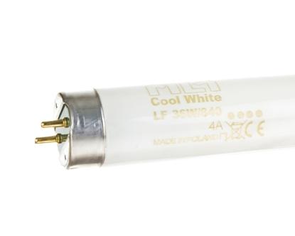 Świetlówka G13 36W 840 4000K LF80 Cool White 1SL/25 8727900961775 PILA /25szt./