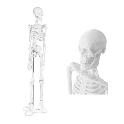 Model anatomiczny ludzkiego szkieletu 47 cm