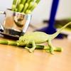 XL Safari Ltd 261029 młody Kameleon 17x10,7cm  (1:1)