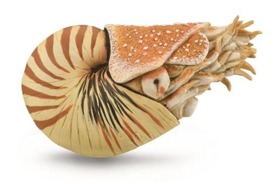 CollectA 88907 Nautilus pompilius  rozmiar: XL