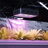 Lampa do uprawy wzrostu roślin Hillvert LED 1200W czarna