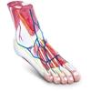 Model anatomiczny 3D stopy człowieka skala 1:1