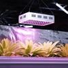 Lampa do uprawy wzrostu roślin Hillvert LED 600W biała