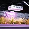 Lampa do uprawy wzrostu roślin Hillvert LED 1000W biała
